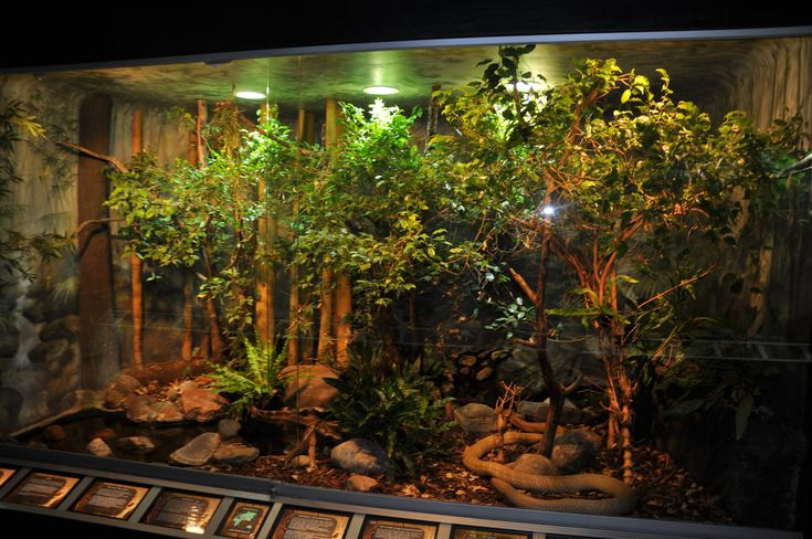 1000 Ideas About Reptile Room On Pinterest Reptiles