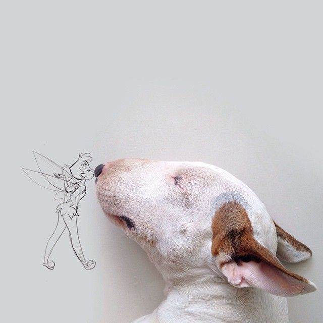 Jimmy Choo the bull terrier rafaelmantesso's photo on Instagram