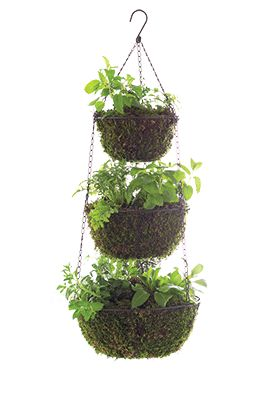 hanging herb baskets-layer with sphagnum moss or maybe coco liners, fill with soil, plant and hang in a sunny spot