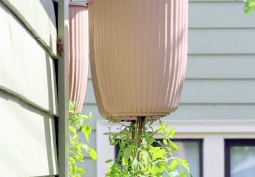 how to Plant Upside Down Tomato Planters Topsy Turvy DIY