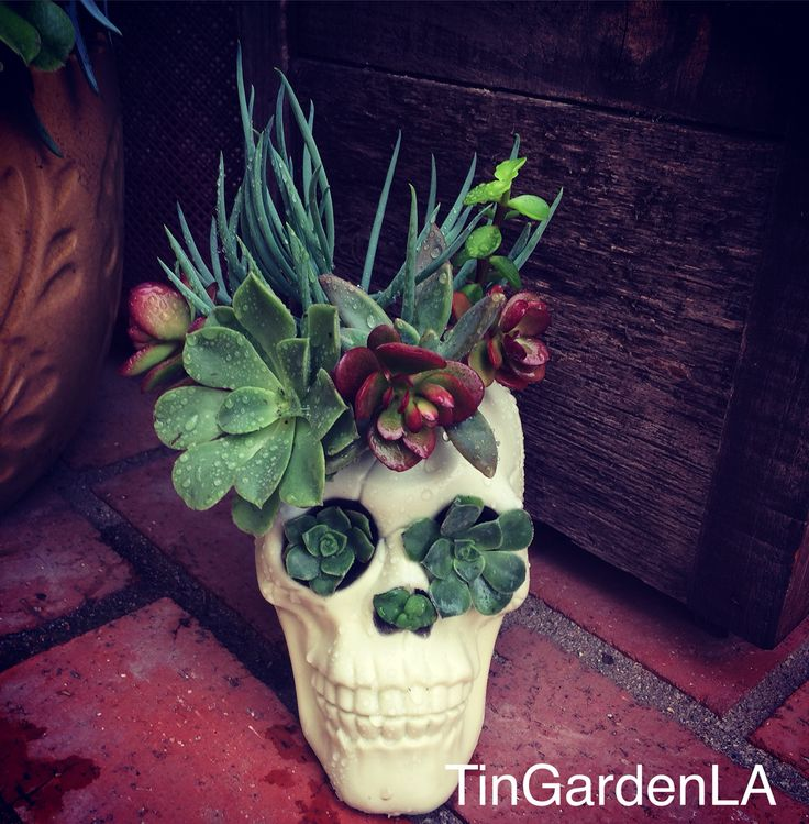 Repurposed Halloween decoration into a succulent sugar skull planter...love it!