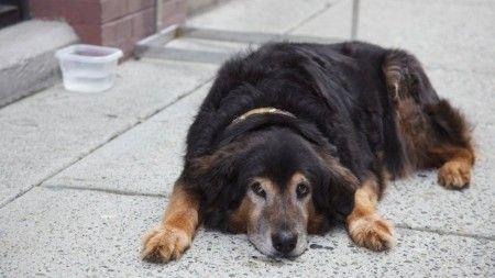 Negotiating a Lease – Pet-Friendly Apartments