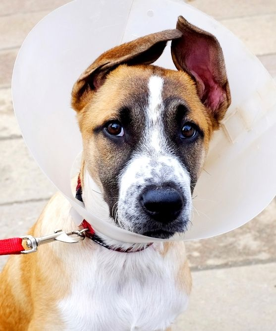 Best Dog Cone Collar Ideas On Pinterest Dog Cone Pet - Dog portrait photography shows how they hate wearing the cone of shame