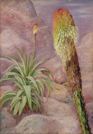 A Giant Kniphofia near Grahamstown, Marianne North; c. 1882; Oil on board; Collection: Marianne North Gallery Royal Botanic Gardens, Kew, Richmond, Surrey, England