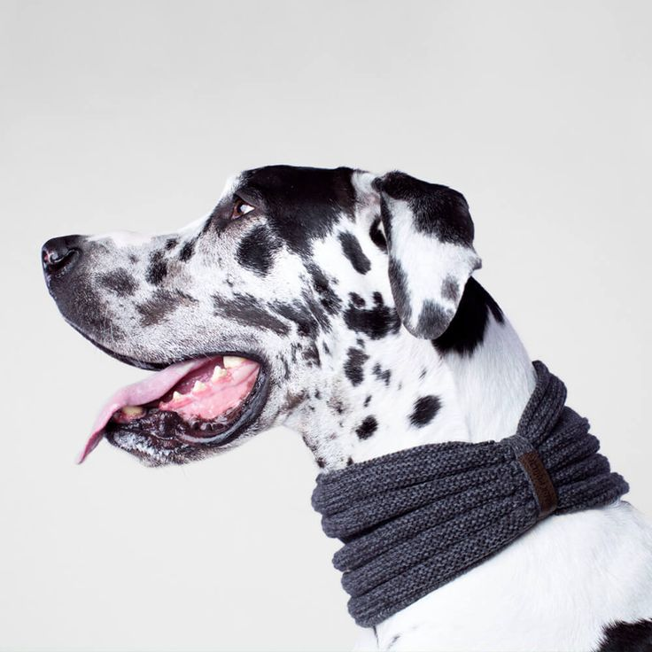 Canada Pooch Dog Scarf | The Charcoal Sierra Sherpa scarf adds a stylish touch to every Fall outfit with the Canada Pooch Scarf Collection