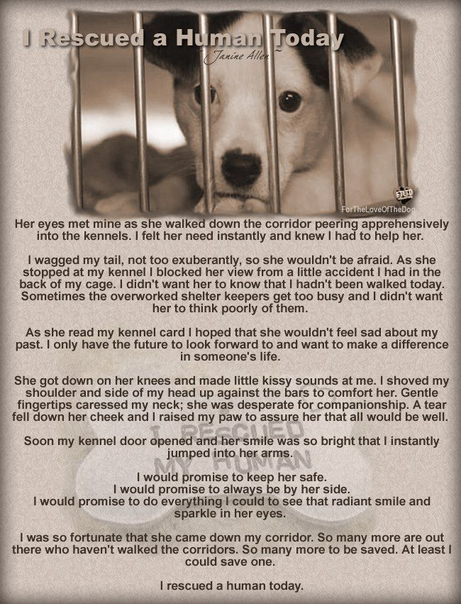 The Lazy Pit Bull: Letter From A Shelter Dog: Who Saved Who? http://www.thelazypitbull.com/2012/10/letter-from-shelter-dog-who-saved-who.html