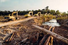 Keep loggers and the palm oil industry out of the Peruvian Amazon!