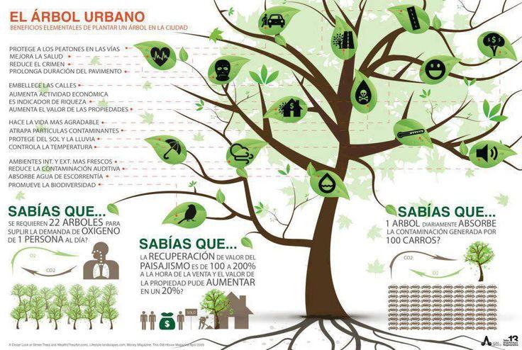 La importancia de los árboles en las ciudades #infografia #infographic #medioambiente