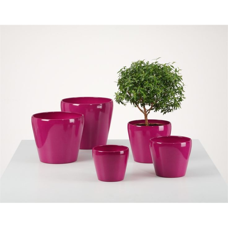 Tuscan Path Fuchsia Glazed Scheurich Indoor #Pot