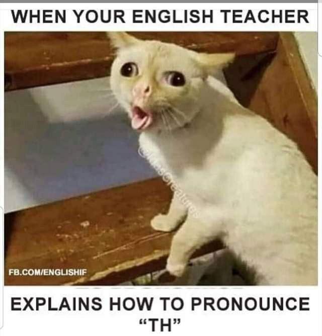 When Your English Teacher Explains How To Pronounce Th Funny Cat Memes Cat Memes Funny Cat Jokes