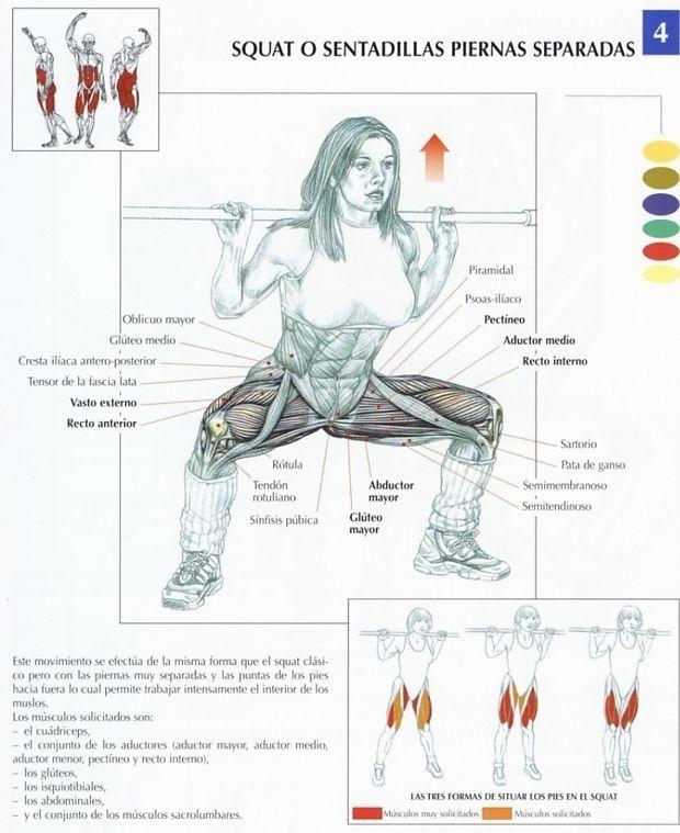 como.trabajar los diferentes musculos de los gluteos - Buscar con Google