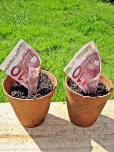 Geldplant