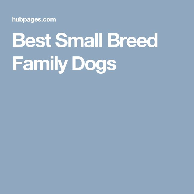 Best Small Breed Family Dogs