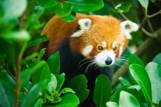#Wellington Zoo is home to New Zealand's native treasures and endangered exotic animals.