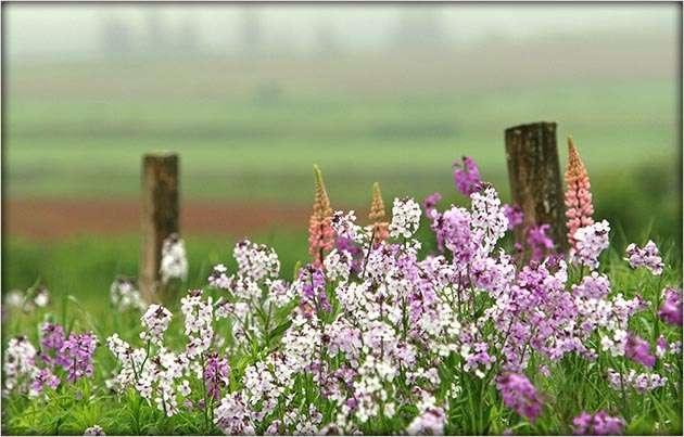 Wow! Love wild flowers!