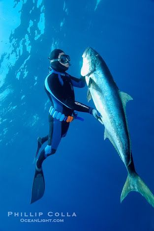 7 best dream dive destinations images on pinterest for Guadalupe island fishing