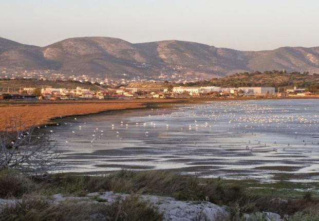 Πρωτοβουλία για την ανάδειξη του υγροτόπου Βουρκαρίου Μεγάρων και Περιπατητική Ημερίδα στο Ρέμα Πικροδάφνης