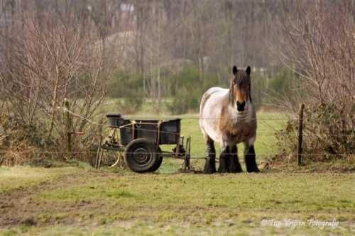 Paard met kar... stilleven uit de oude doos?
