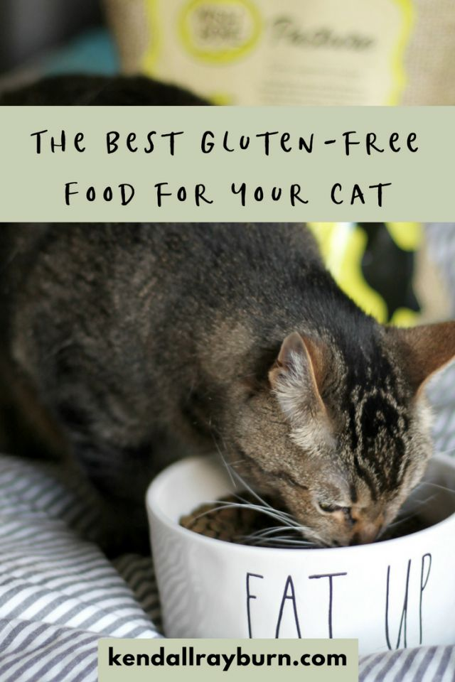 Best Free Cat Food Ideas On Pinterest Food For Puppies Dog - Meatball the fat cat kept eating everyones food so his owners came up with a clever solution