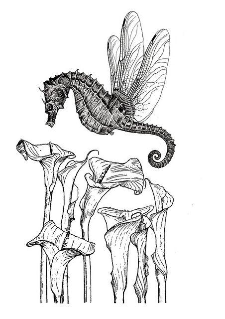 Pollinate design - engraving collage