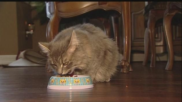 Cat baiting upsetting Fort Bend Co. residents