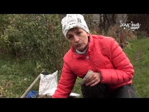 """(10) Подзимний посев. Сеем морковь под зиму. Сайт """"Садовый мир"""" - YouTube"""