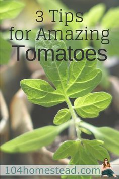 3 Tips for Growing Amazing Tomatoes
