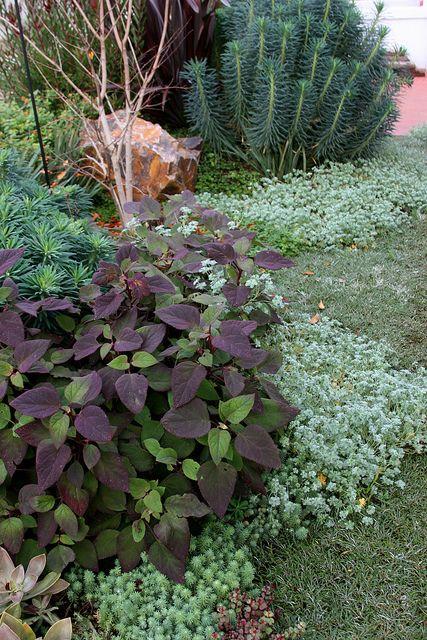 Floradora gardens