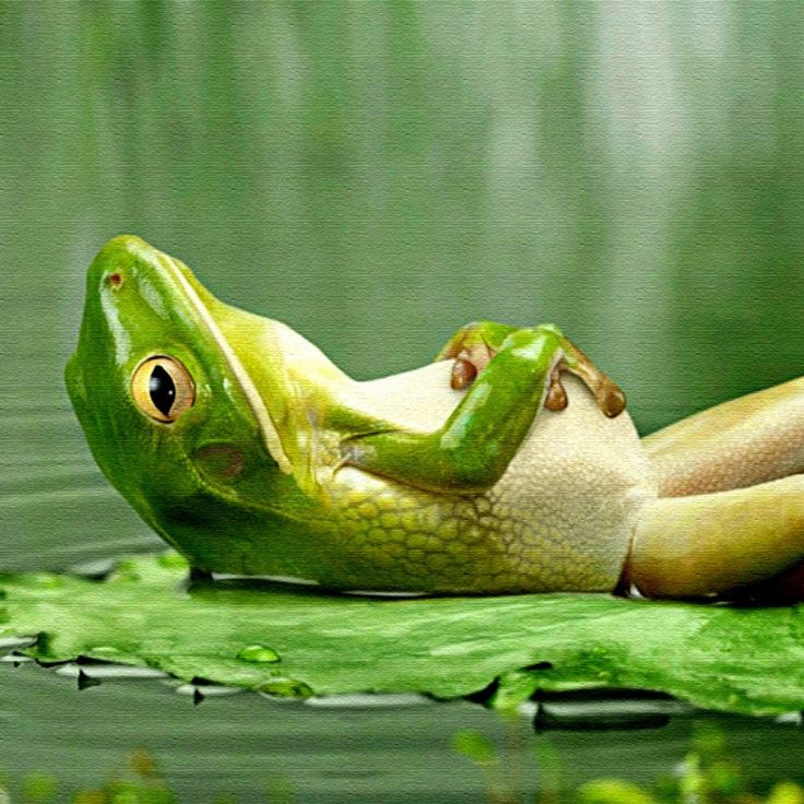 frog - Google Search
