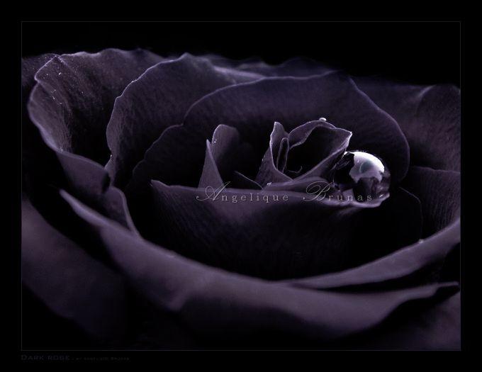 :: Dark rose :: by Liek on DeviantArt