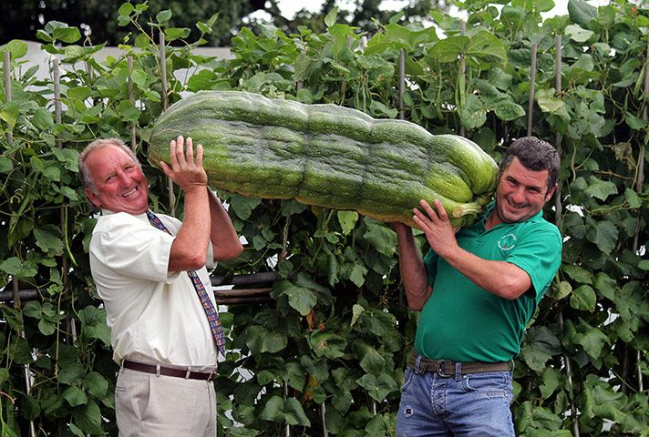 """""""Gardener Phillip Vowles and his son Andrew with a giant 51kg marrow grown in Llanharry, south Wales."""" More awkward times."""