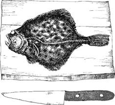 Wim Hofman illustratie