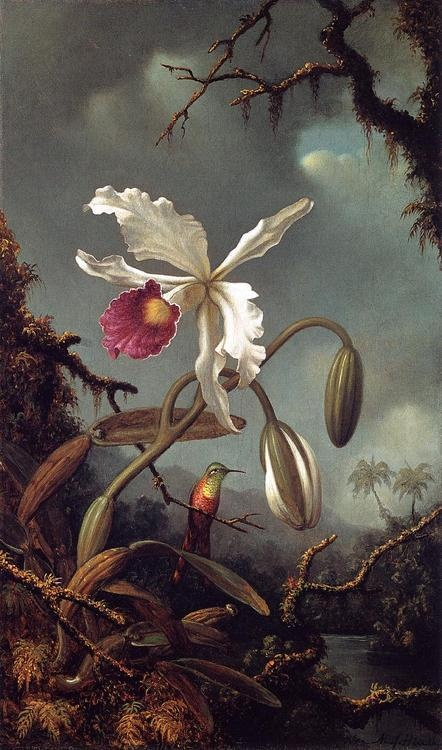 """White Brazilian Orchid""  --  1875-90  --  Martin Johnson Heade  --  American  --  Hudson River Valley School  --  No further reference provided.."