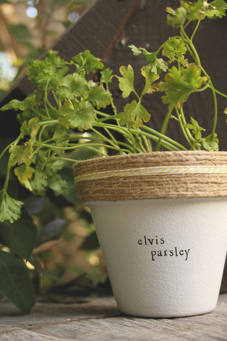Cute Pots Elvis Parsley By Plantpuns On Etsy