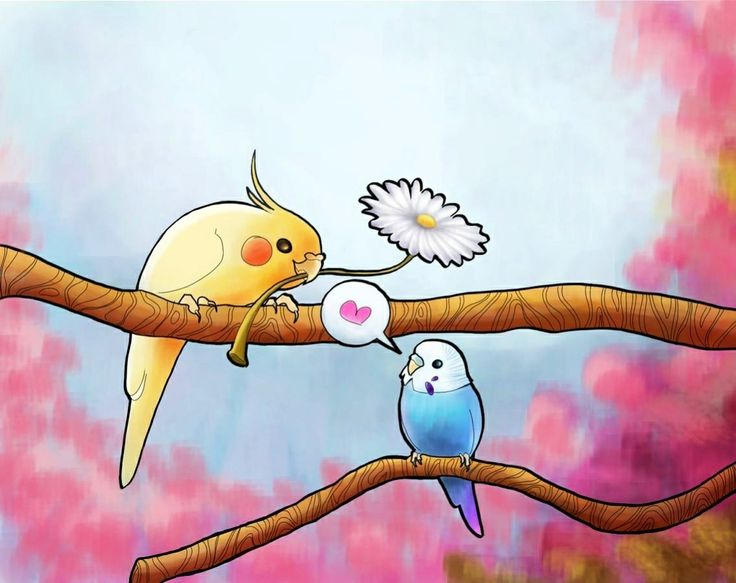 рисунки попугаев смешные сдаются застекленными балконами