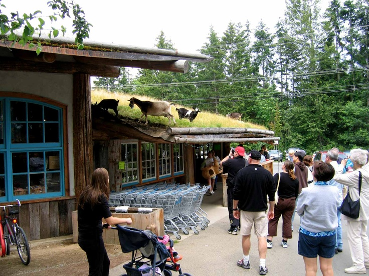 Coombs, BC - goats on the roof and amazing ice cream!:)