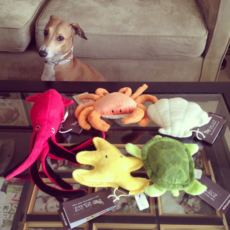 "Your dog doesn't have to roll in dead seagull to enjoy the beach! Tell us about the grossest thing your pup has ever done and our favorite story will get a $54 set of plush toys. | Calling All Toy Maulers! We're Giving Away a Set of ""Under the Sea"" Dog Toys from P.L.A.Y. (Contest ends June 11th)"
