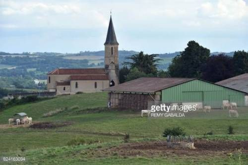 12-30 Cows graze in a field in Marciac, on July 28, 2017. / AFP... #marciac: 12-30 Cows graze in a field in Marciac, on July 28,… #marciac