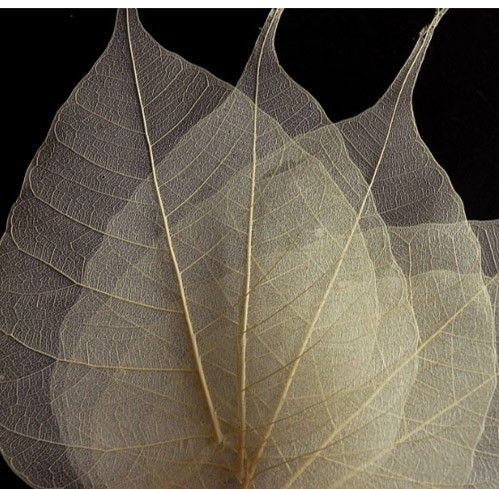 how to make skeleton leaves with bleach