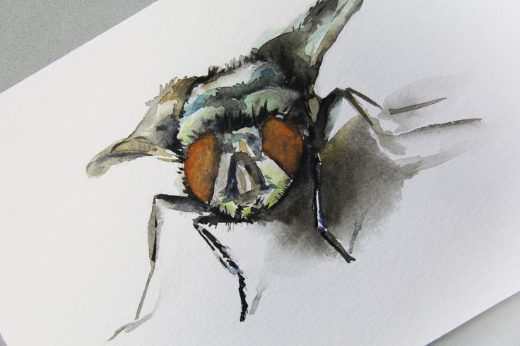 Watercolour fly for augmented reality app. Red ochre colour. 20x30 cm 2016