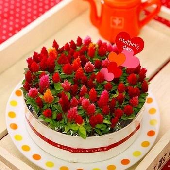 Romantic flower cake セロシア花鉢「ロマンティックケーキ」