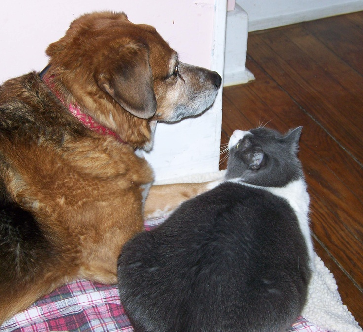 Cats and dogs..living together (Lucy and Willie) Dog cat