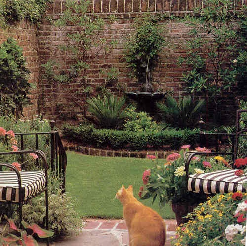 I love that brick 'fence' and the orange kitty!