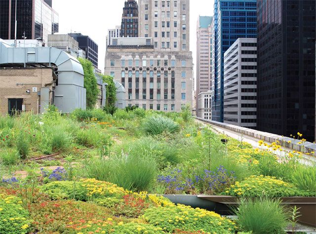 chicago city hall green roof - Google Search