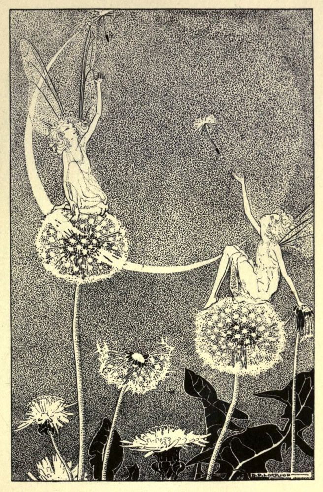 Illustration by Dorothy Lathrop. [dandelion, Taraxacum officinale, Asteraceae], 1920s