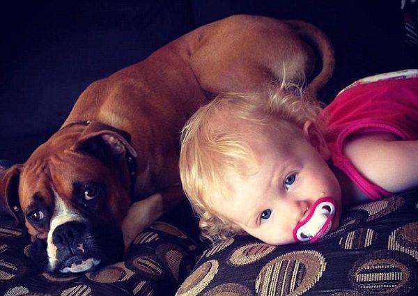 AMIGOS VERDADEIROS - Cachorro leva picada de cobra para salvar o bebê, veja... - https://pensabrasil.com/amigos-verdadeiros-cachorro-leva-picada-de-cobra-para-salvar-o-bebe-veja/