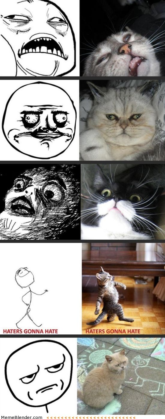 rage faces cat - Szukaj w Google