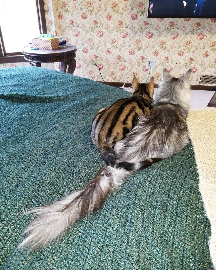 That's a lot of tail.