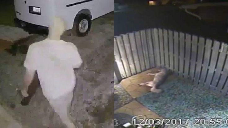 Video Released in Hopes of Catching Person Responsible for Shooting Dogs Outside Pembroke Pines Home  - NBC 6 South Florida