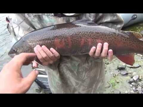 Рыбалка на царь рыбу Тайменя, Ленка, Хариуса. Рыбалка в сказочной тайге....